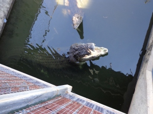 A visit to Crocodylus Park, Darwin, Northern Territory, Australia - July 2014