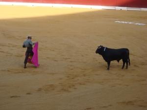 Bull fight in Murcia, September 2012